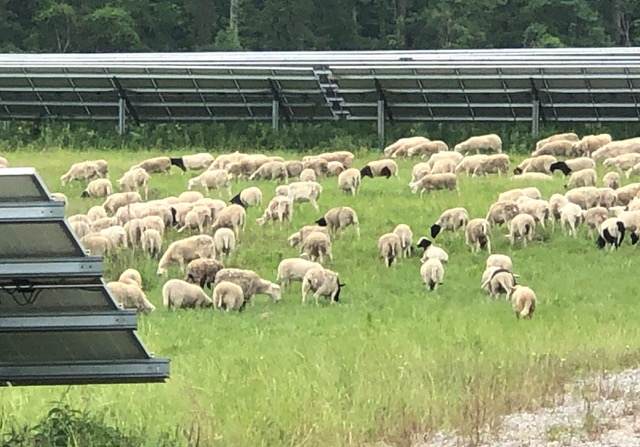 Hattiesburg regenerative energy facility with sheep grazing